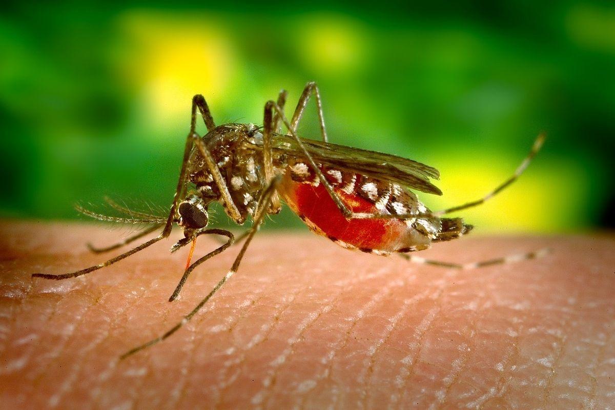 La febbre del Nilo vi mette paura? Ecco tutto quello che c'è da sapere