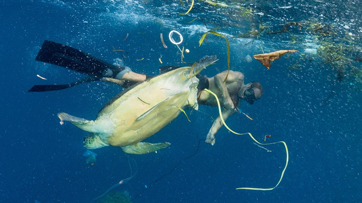Enter New Competition to Solve the Plastics Crisis and (Bonus) Win $500K