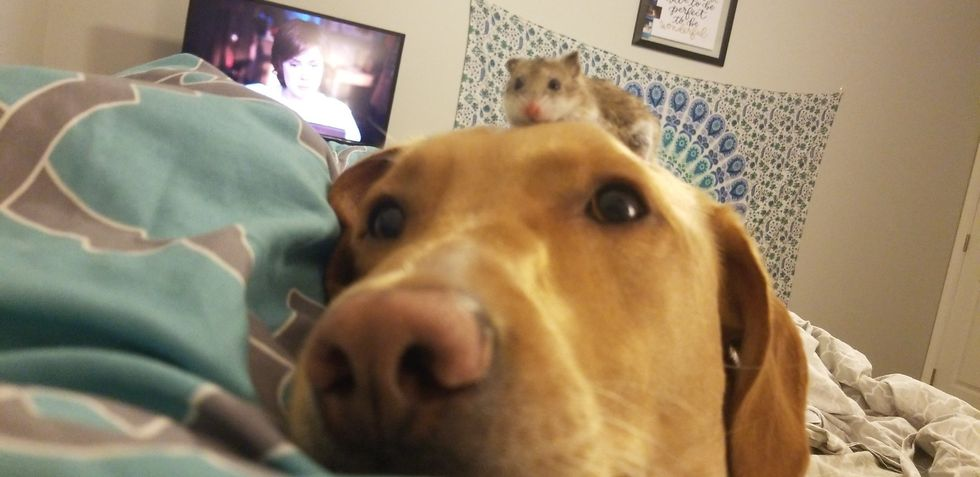Confessions Of A Multi-Species Pet-A-Holic