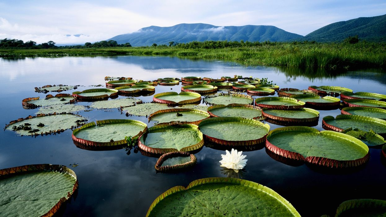 Saving the World's Largest Tropical Wetland