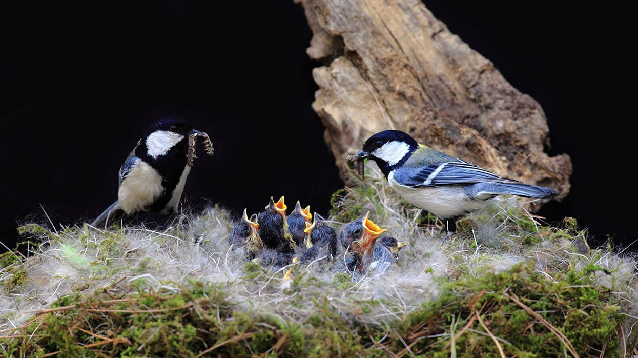 Climate Change Leading to Fatal Bird Conflicts