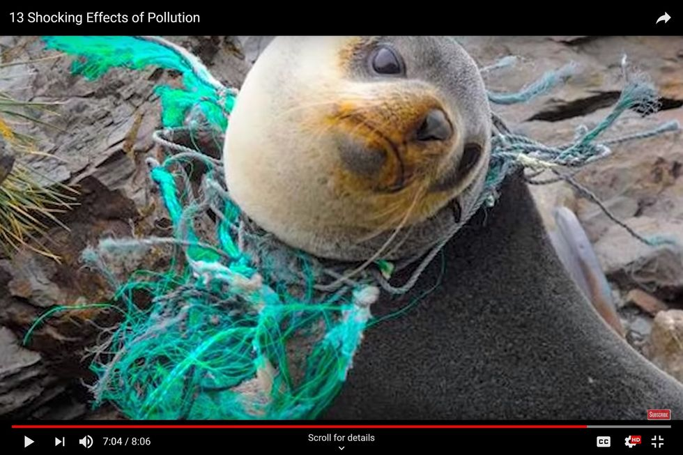 Your Plastic Trash Is Turning Our Oceans' Marine Life Into Marine Death
