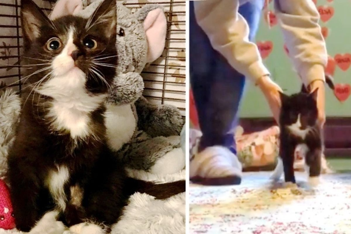 Kitten Who Couldn't Move Her Hind Legs, Shows Others She Can Walk Again