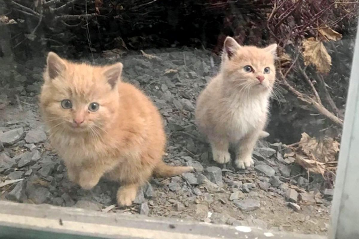 2 Kittens Found Wandering into Workplace Together, Won't Leave Each Other's Side