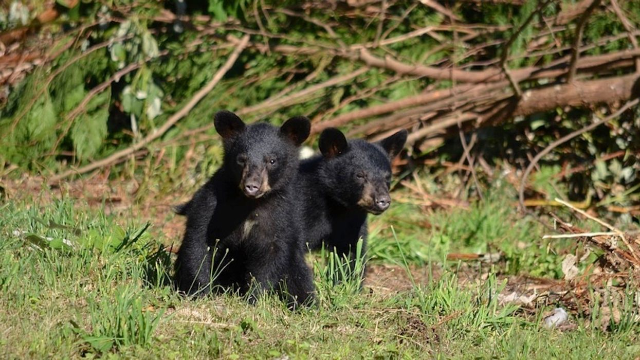 Alaska Poachers Sentenced for Killing Mother Bear and 'Shrieking' Cubs