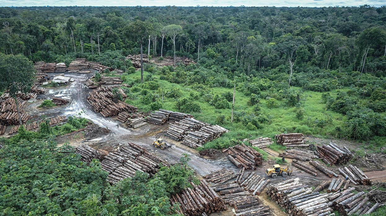 Amazon Deforestation, Already Rising, May Spike Under Bolsonaro