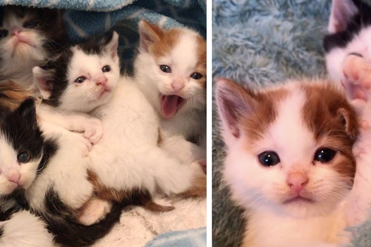 Kittens Found Huddled Up in Trash Bin, Kept Each Other Safe Until Help Arrived