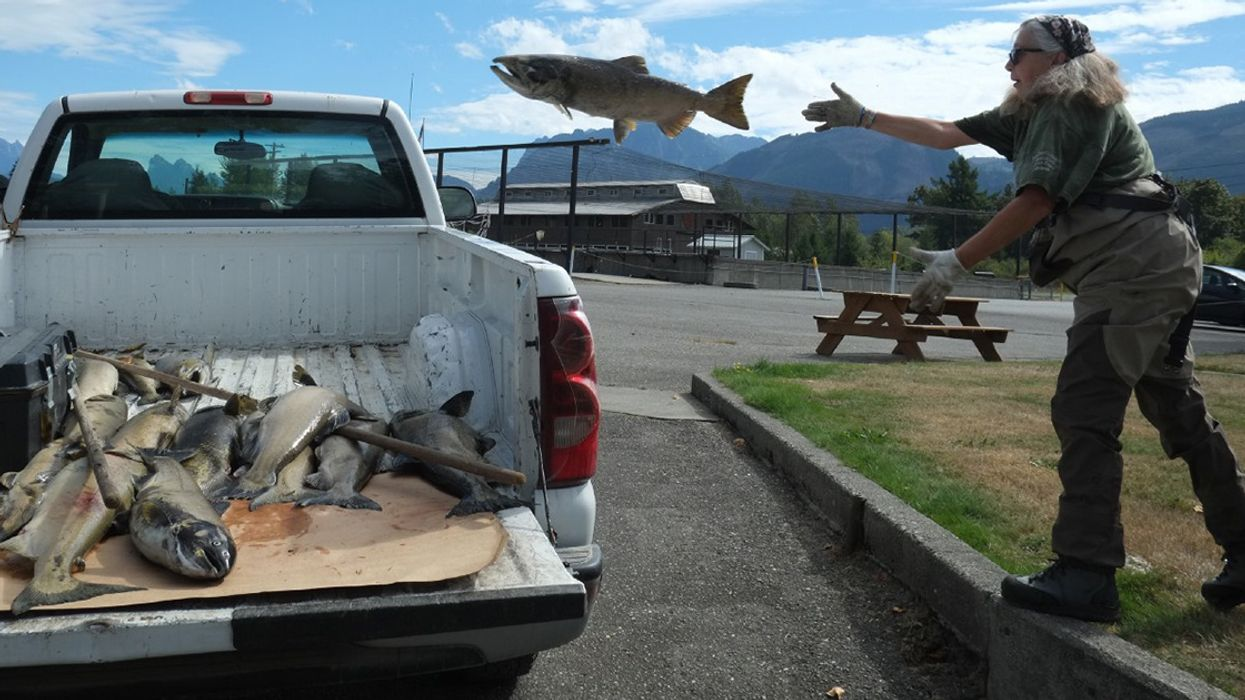 Watch: Climate Change Is Cooking Salmon in the Pacific Northwest