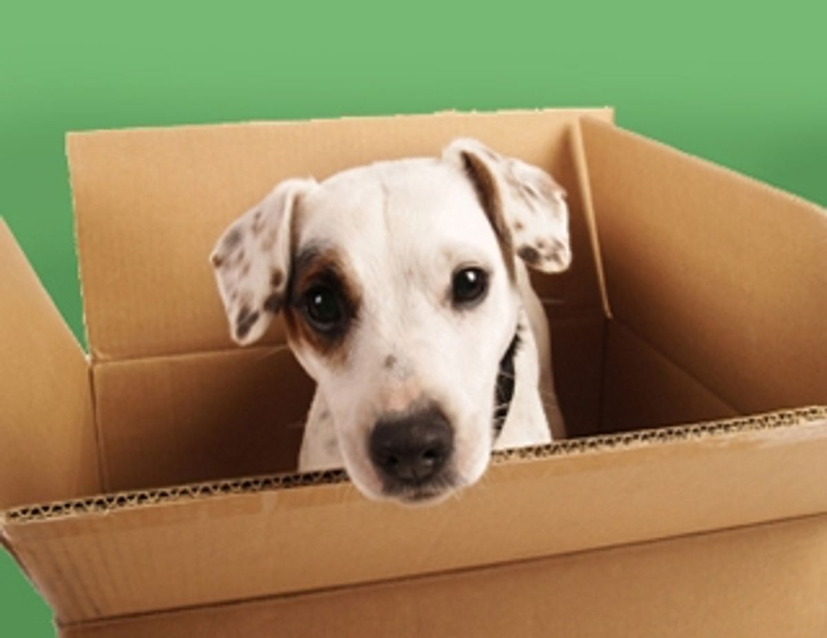 Moving with pets? Take extra care