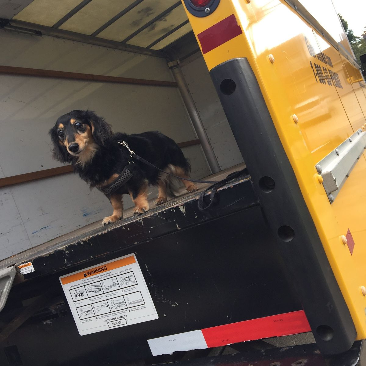 Fur-get About Stress When Moving with Pets