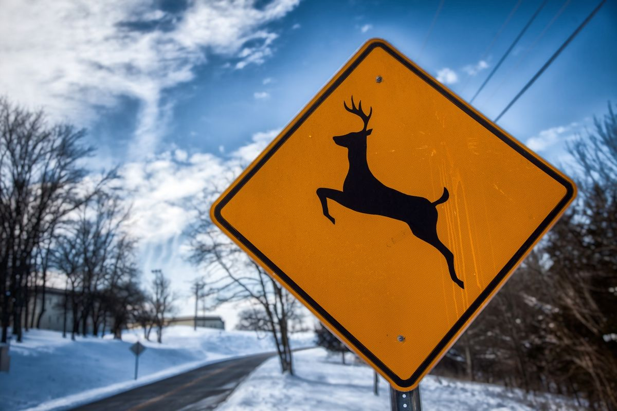 Watch Out for Wildlife on the Road