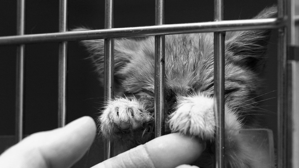 Congress Must Stop USDA's Animal Experiments, Says Whistleblower