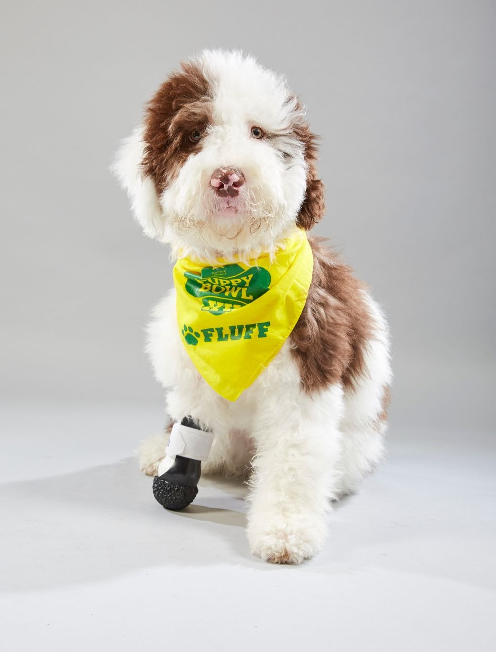Meet the 12 Southern dogs in the Puppy Bowl XV starting line