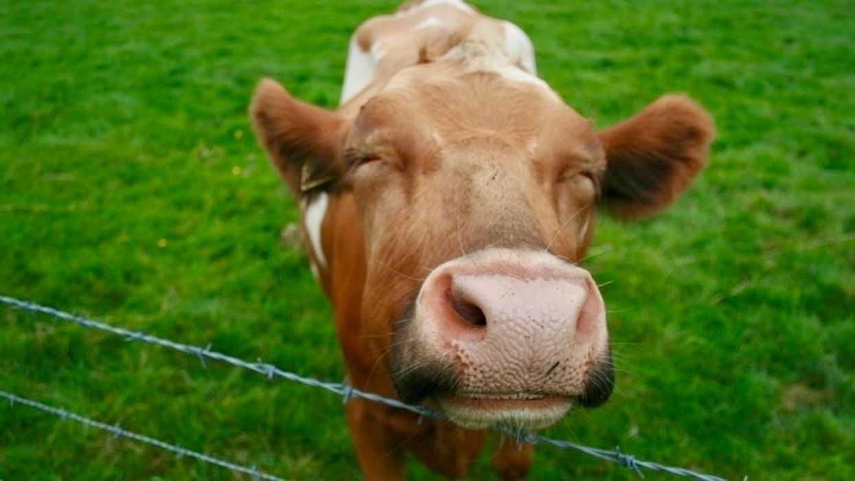 A Record 250,000 People Participated in Veganuary