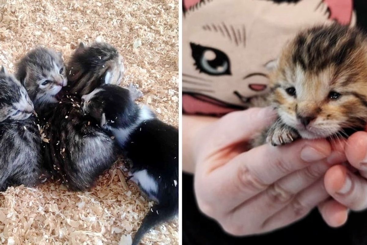 Orphaned Kittens Found With Tinier Adopted Kitty on a Farm, Have Their Lives Turned Around