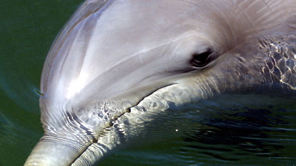 New study: Microplastics found in all beached dolphins, whales, and seals