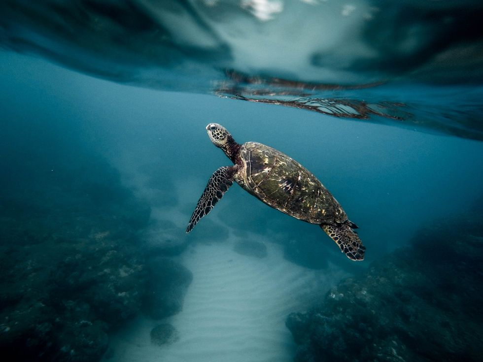 5 Ways We Can Help Protect Marine Life That Will Make You Say 'Shell-Yeah'