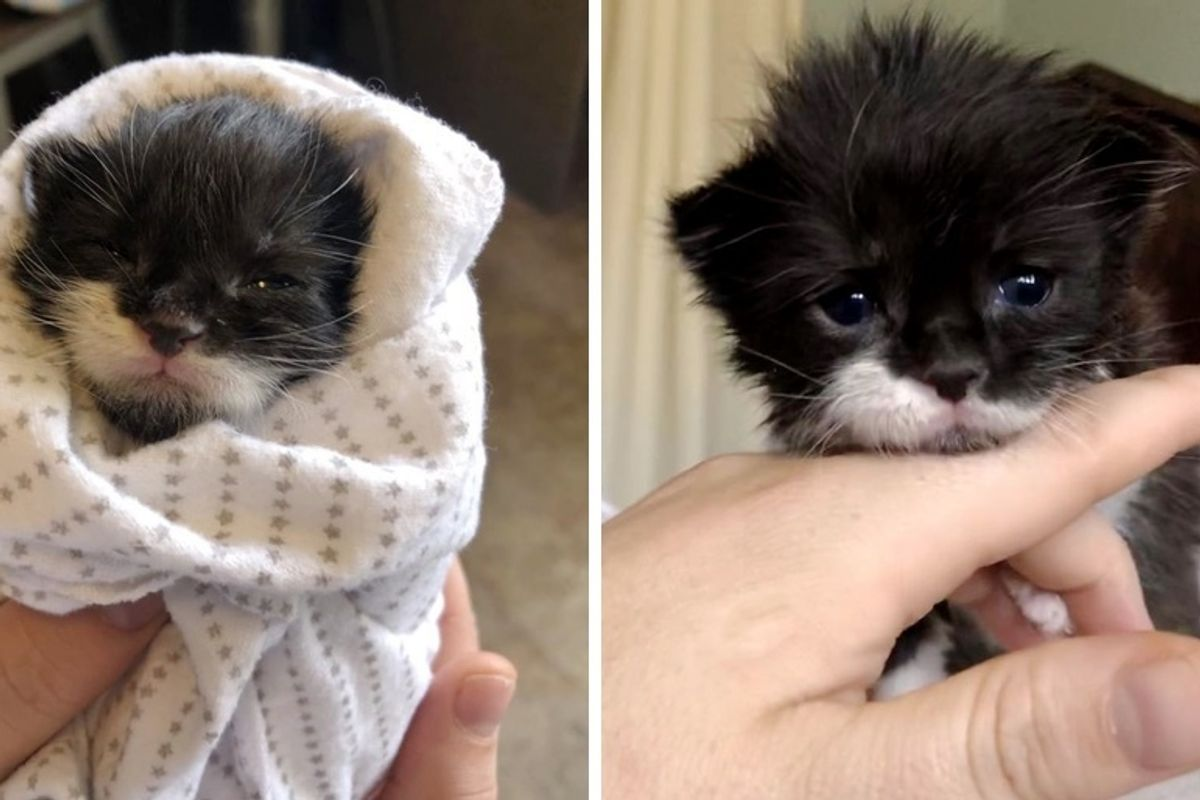 Kitten Found Crying Near Drive-through on Stormy Day, Finds Love from Another Cat and Kitten
