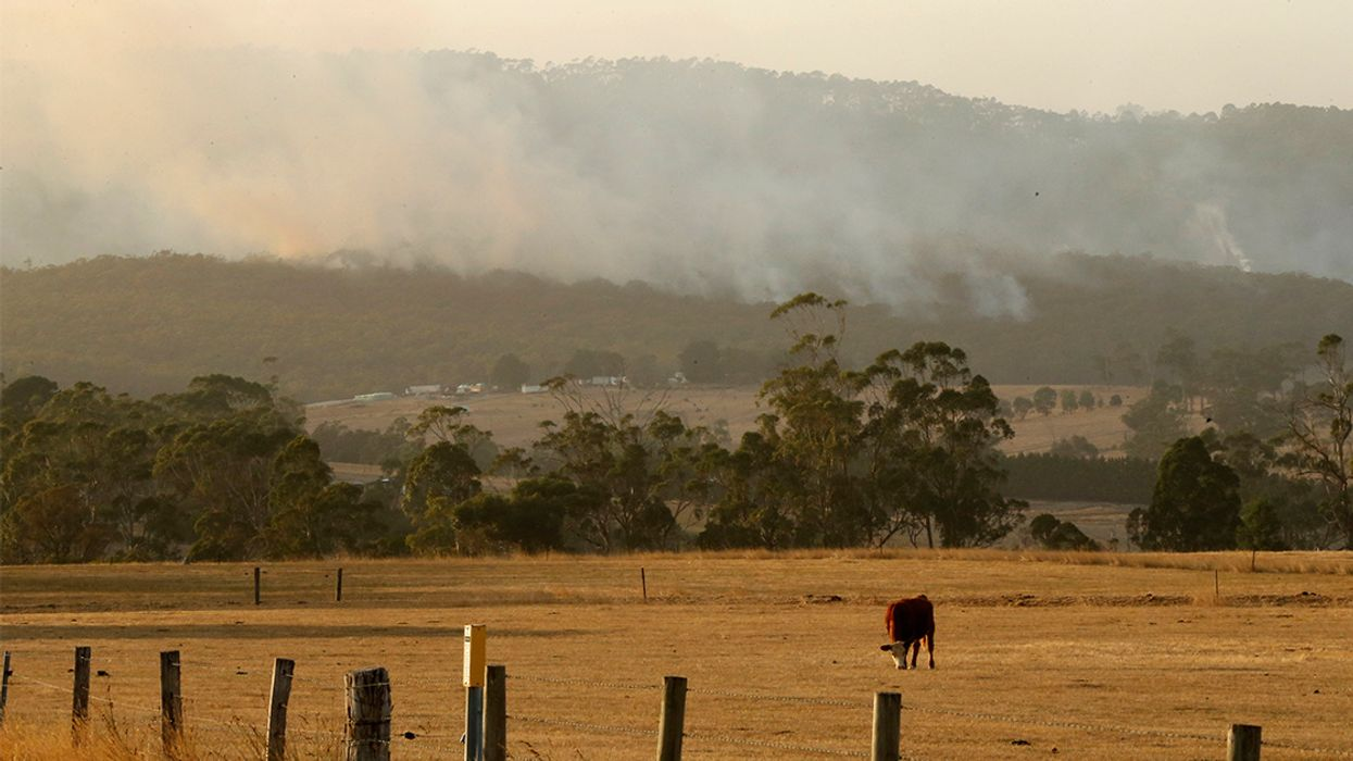 Thousands Flee as 19 Wildfires Burn in Southeast Australia