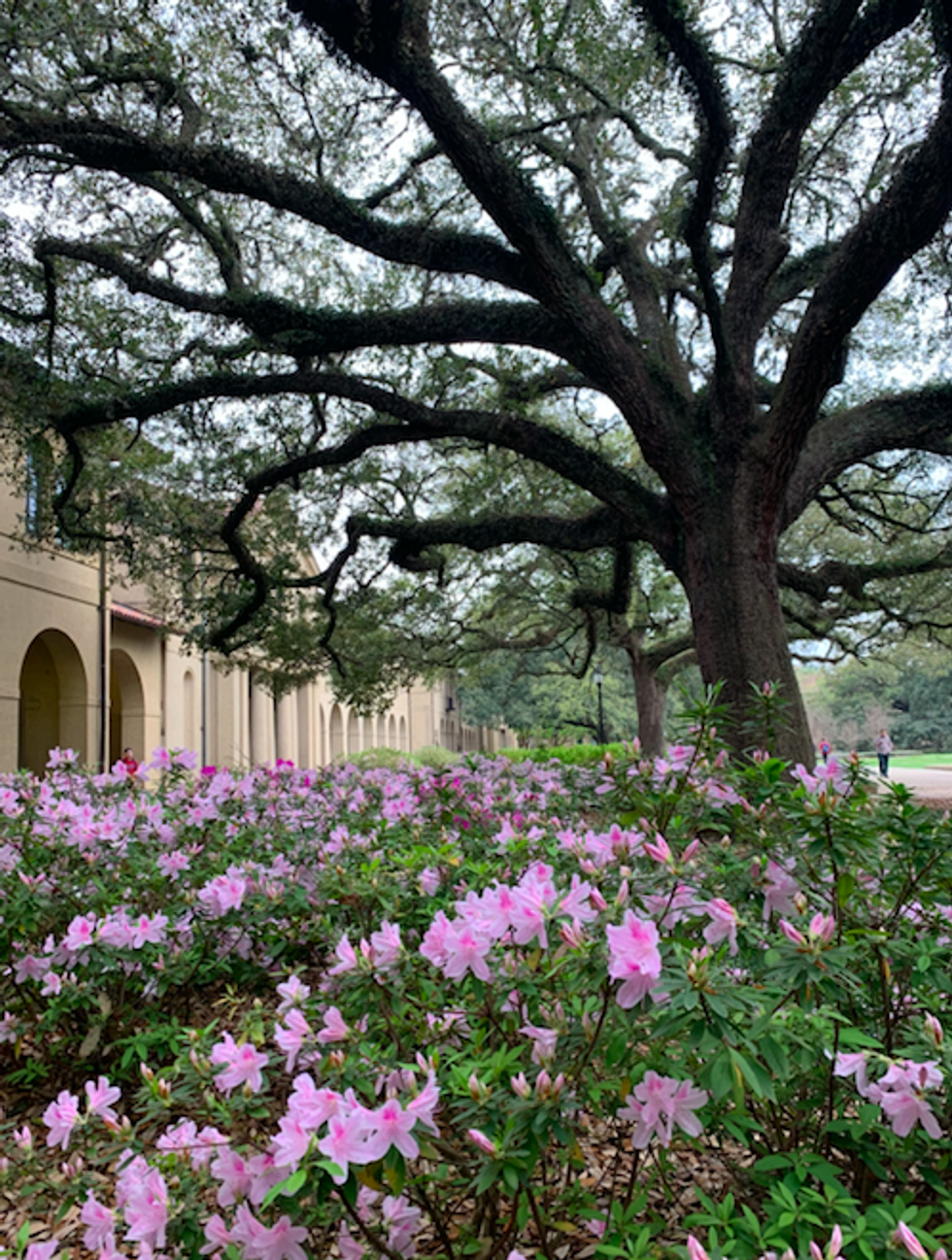 10 LSU Buildings That ACTUALLY Need To Be Fixed, Unlike The Bell Tower
