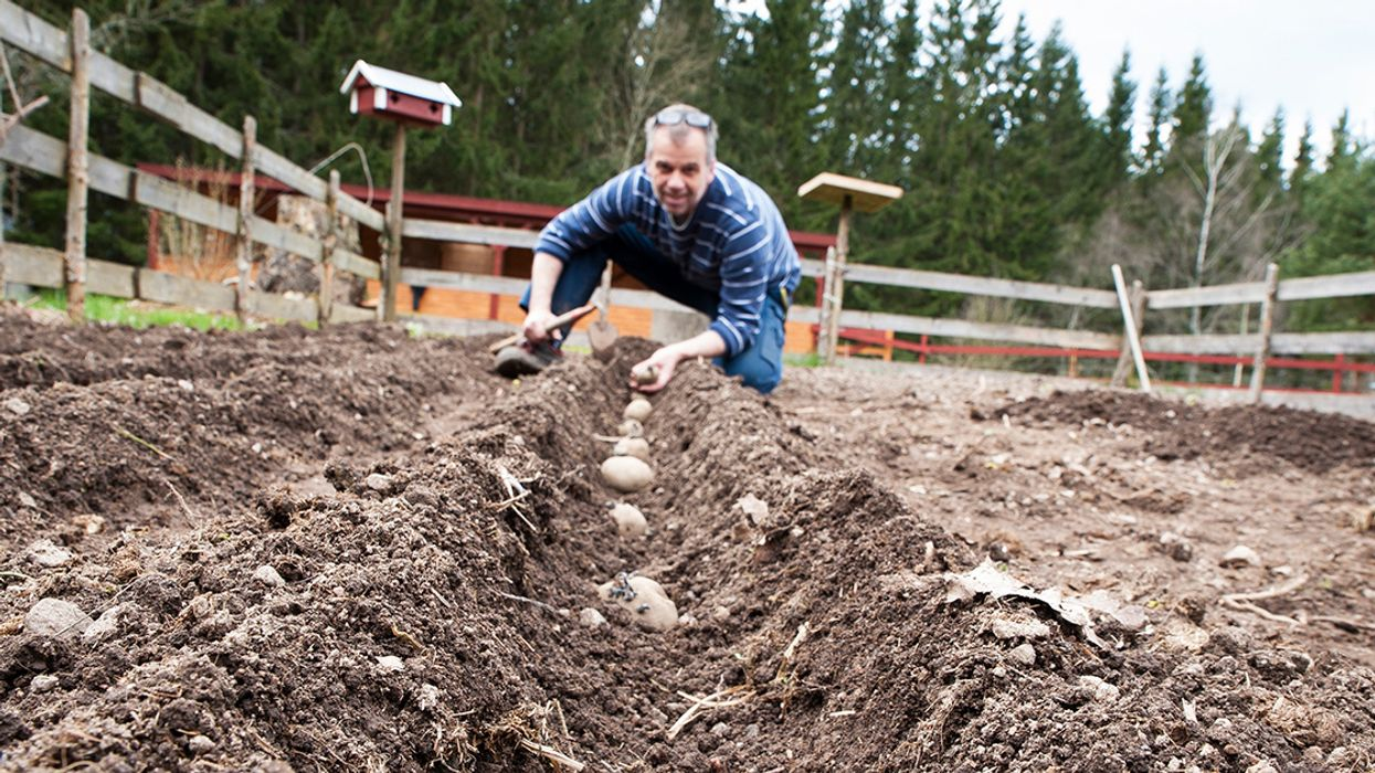 7 Crops to Plant in Late Winter
