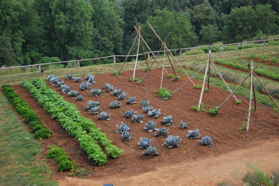 Fast Growing Spring Vegetables
