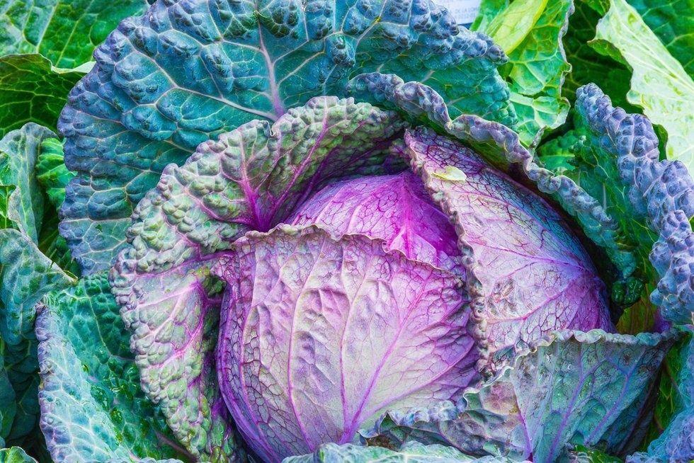 https://www.pexels.com/photo/food-healthy-vegetables-cabbage-33315/