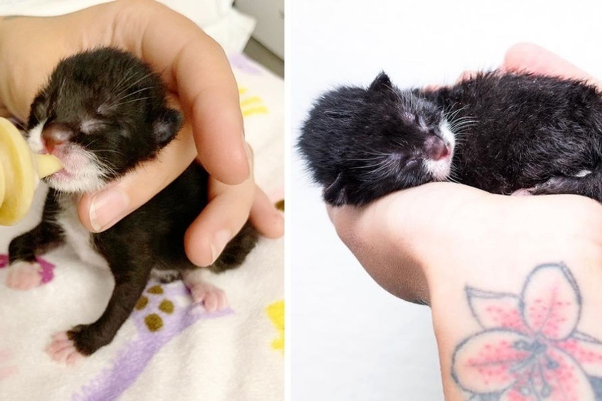Kitten Found on a Porch without a Mom, They Notice She was Born Very Special