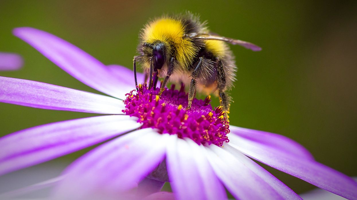 Pesticide Exposure Changes Bees' Genes