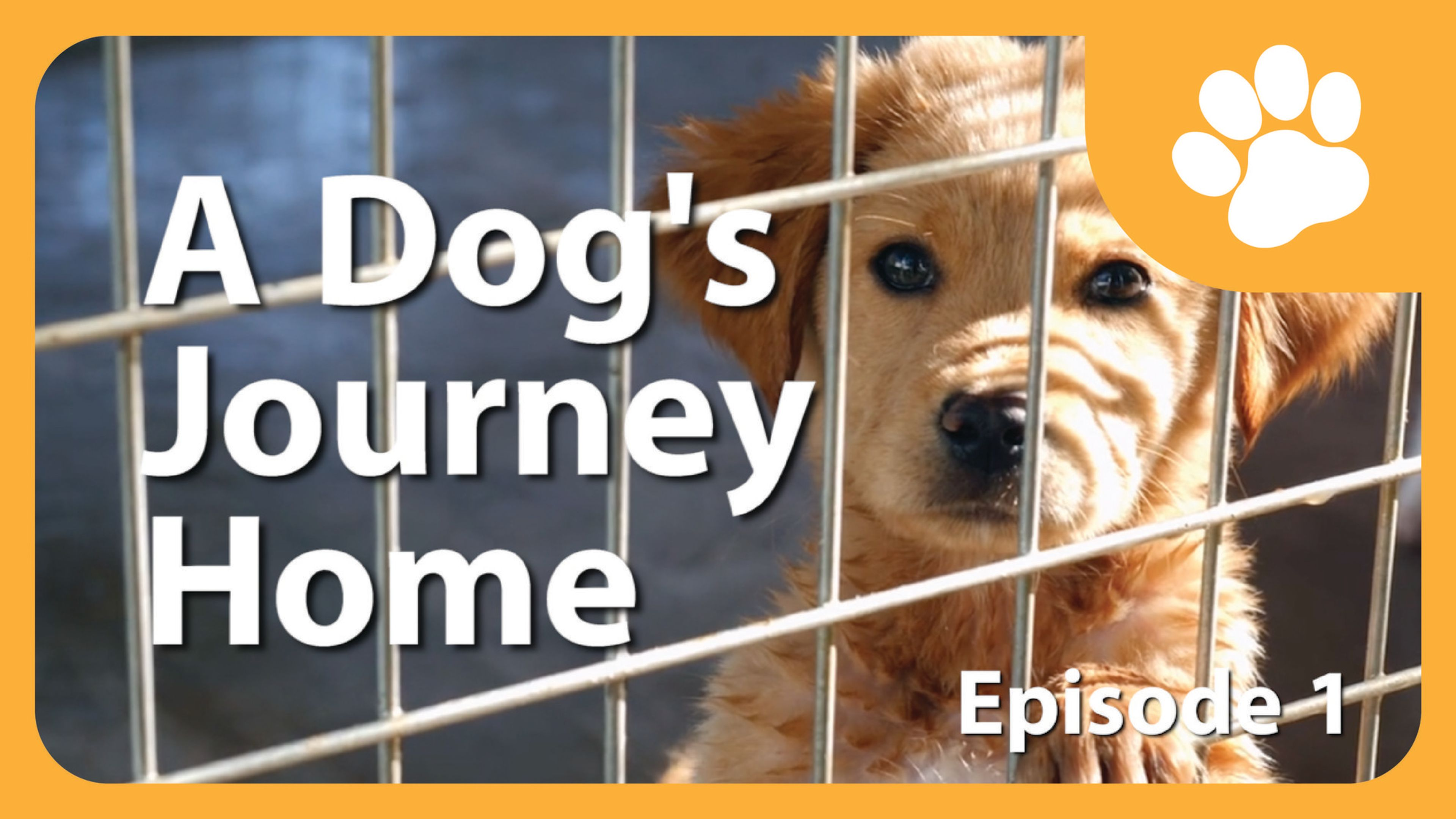 SERIES: Dogs Journey Home – The Rescue and Adoption Initiative that has saved 4000+ Dogs!