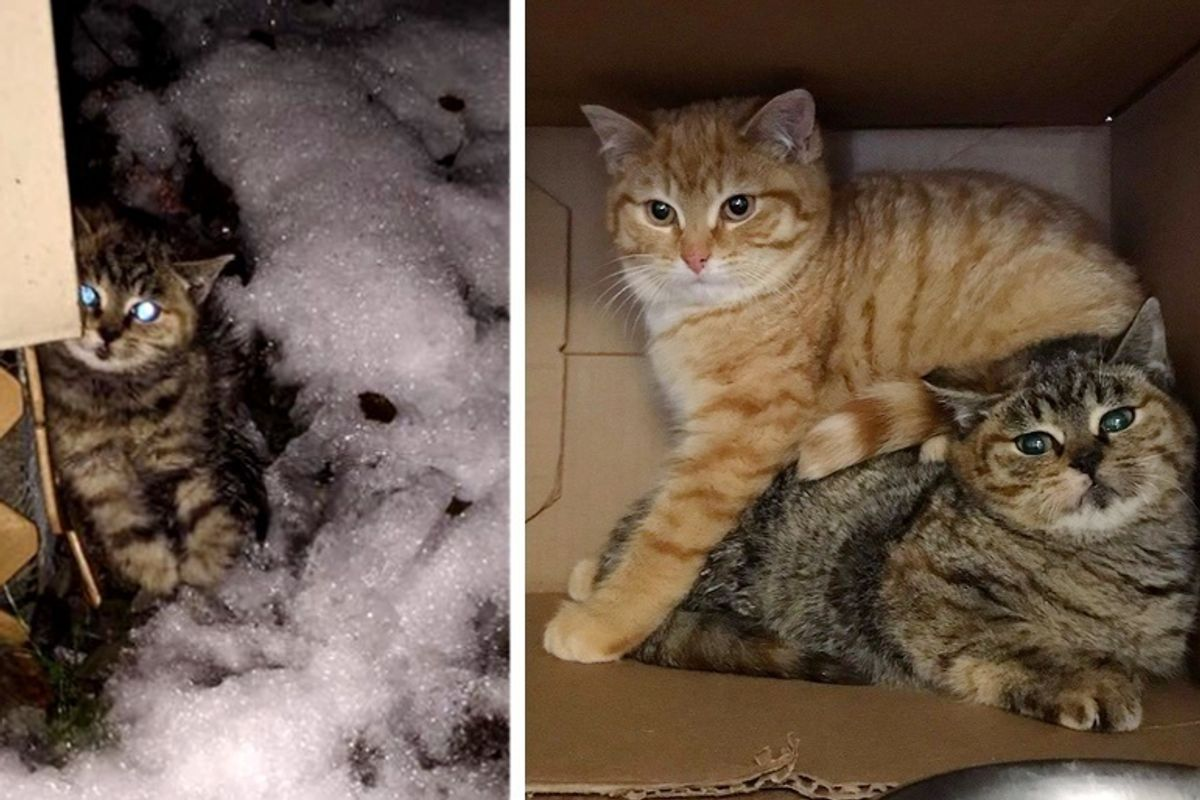 Woman Finds Wobbly Kitten Outside in the Cold and Saves Her and Her Brother Too