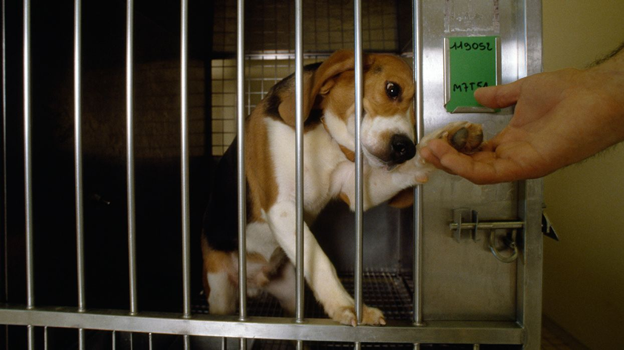 36 Beagles Could Die if DowDuPont Pesticide Test Isn't Stopped, Investigation Reveals