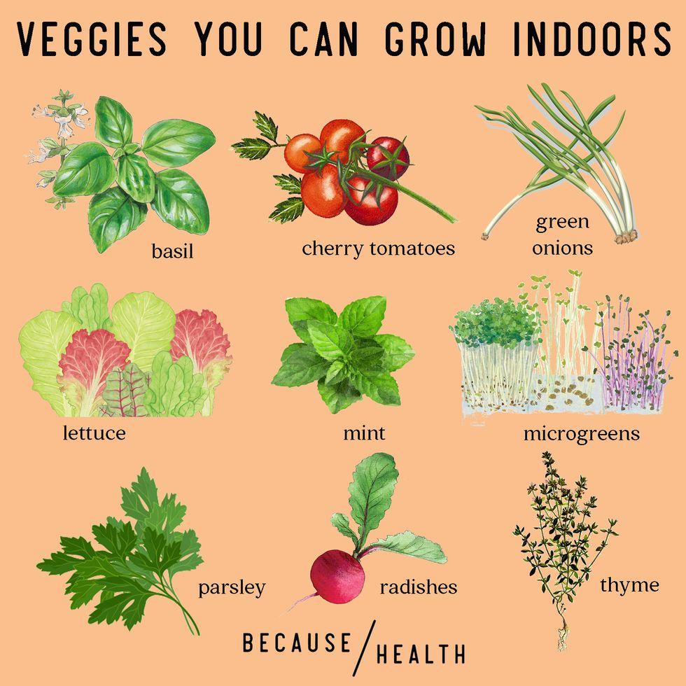 9 Veggies You Can Grow Indoors