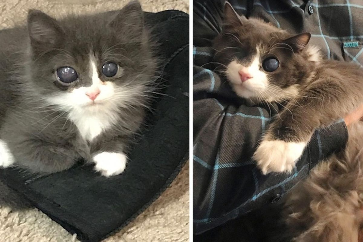 Woman Gave Special Kitten a Home When No One Else Did, and Turned His Life Around