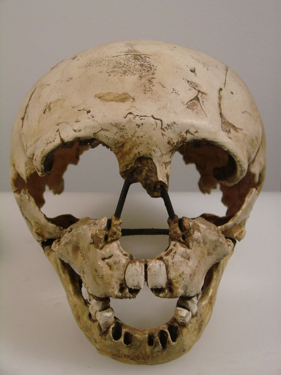 A Review Of The Article 'Neanderthals And Modern Behavior'