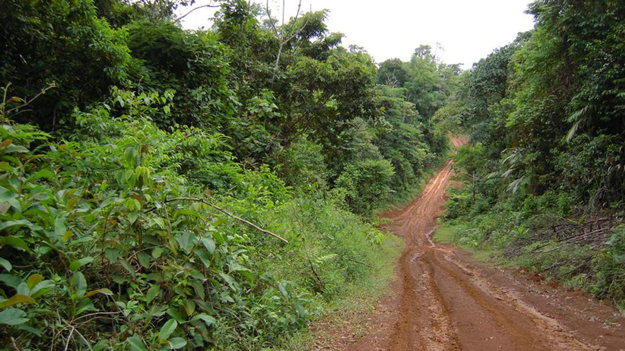 Restoring Tropical Forests Isn't Meaningful if Those Forests Only Stand for 10 or 20 Years
