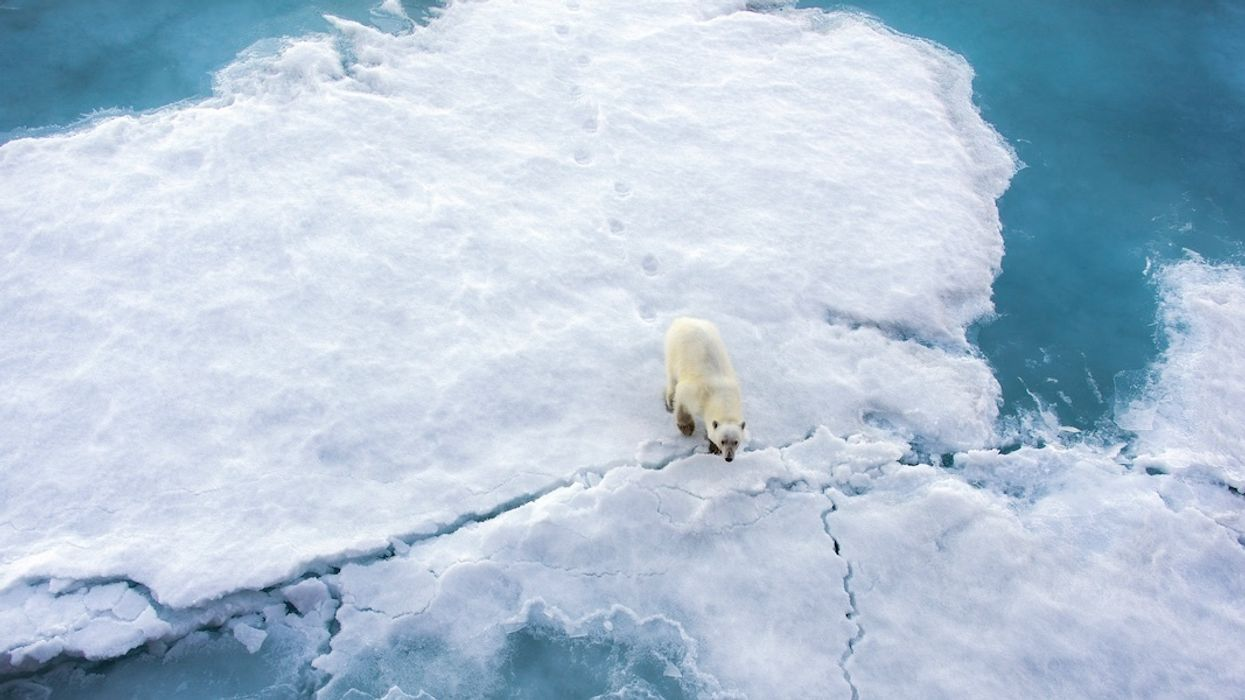 Russian Military Responding to Polar Bear Invasion in Arctic Town