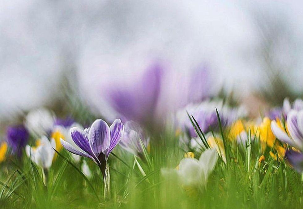 10 Fun Spring Break Ideas