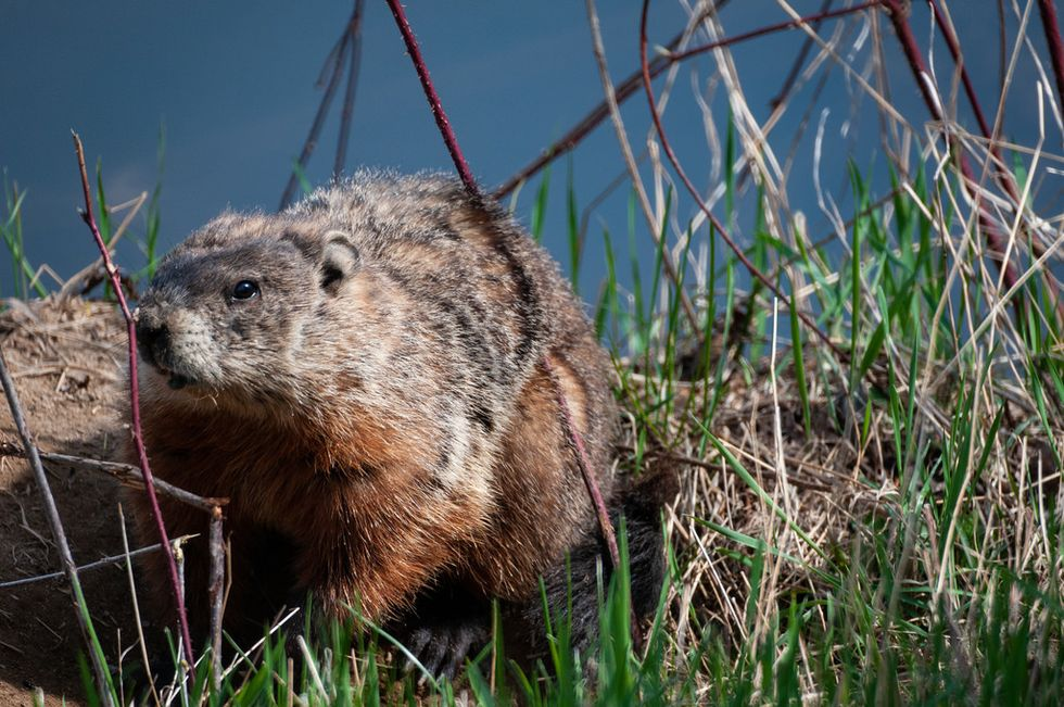 It's Time To Throw Hands With Punxsutawney Phil And Our 'Early Spring'