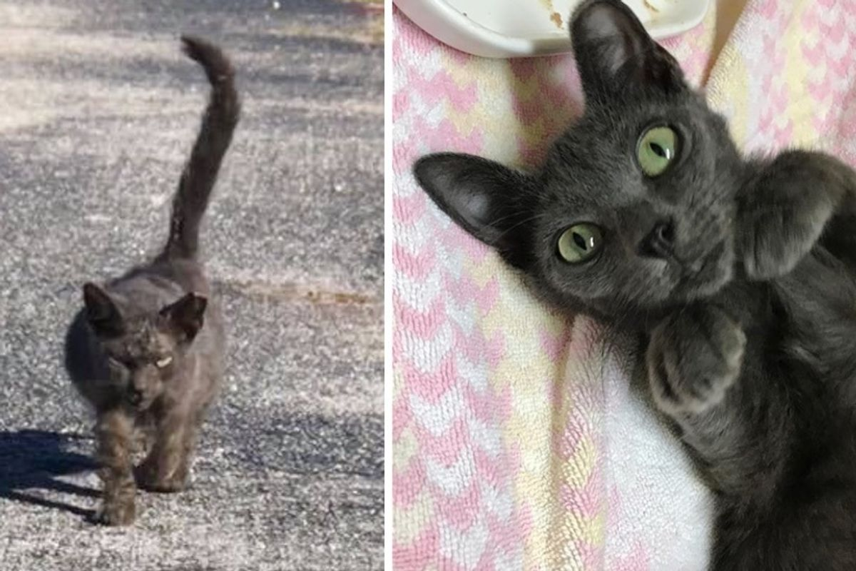 Scraggly Kitten Walks Up to Rescuer and Meows for Help When She Finally Finds Kindness