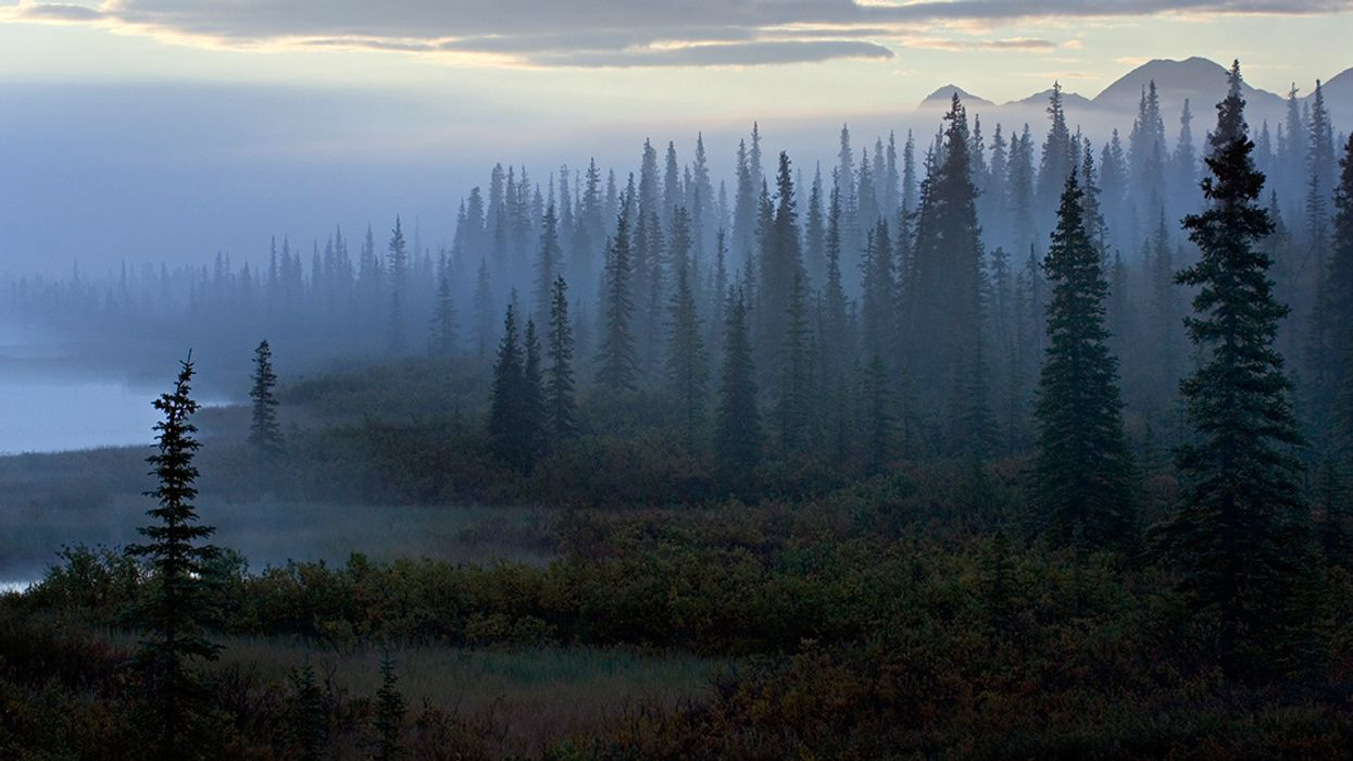 The Issue With Tissue and Toilet Paper: How the U.S. Is Flushing Forests Away