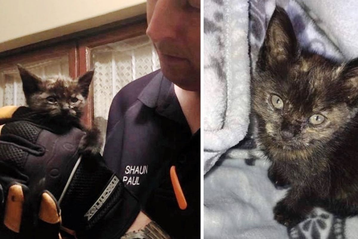 Man Hears Kitten Meowing and Rushes to Save Her from Being Trapped in Cold Storm Drain