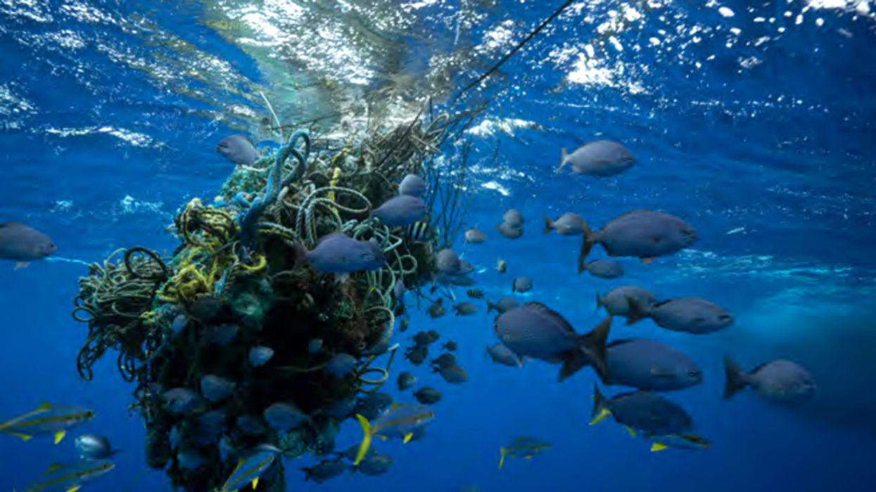 Visionary Study Shows How 30% of World's Oceans Could Be Made Sanctuaries by 2030