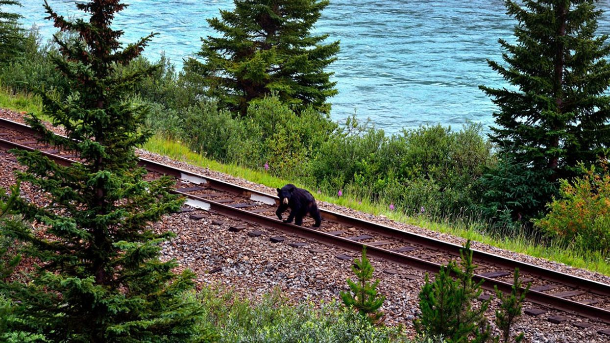 Death by Rail: What We're Finally Learning About Preventing Wildlife-Train Collisions
