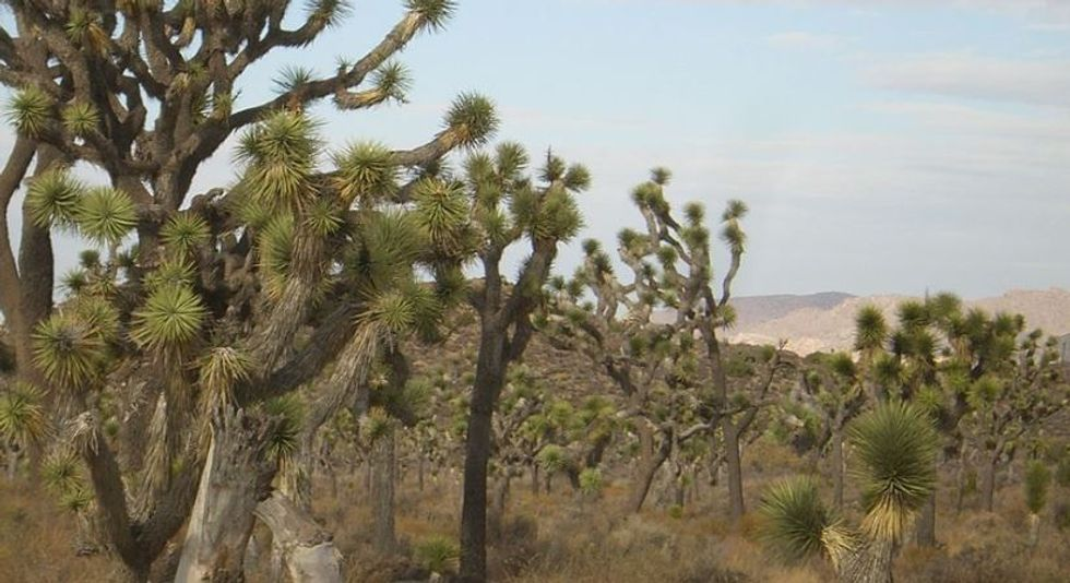 This Instagrammer is unapologetically shaming people into protecting California's Joshua Trees.