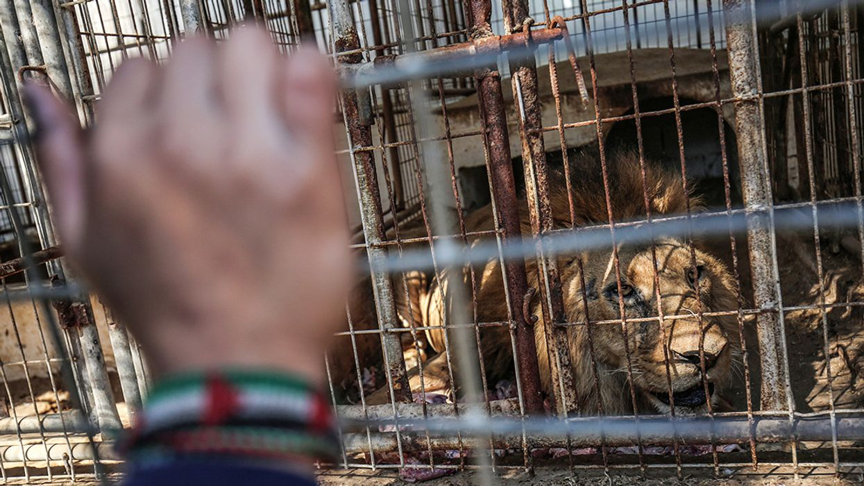 40+ Neglected Animals Evacuated From Gaza Zoo