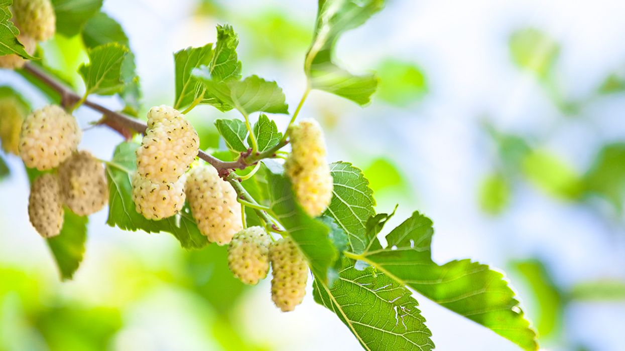 10 New Fruit Trees and Edible Vines for Your Garden This Spring
