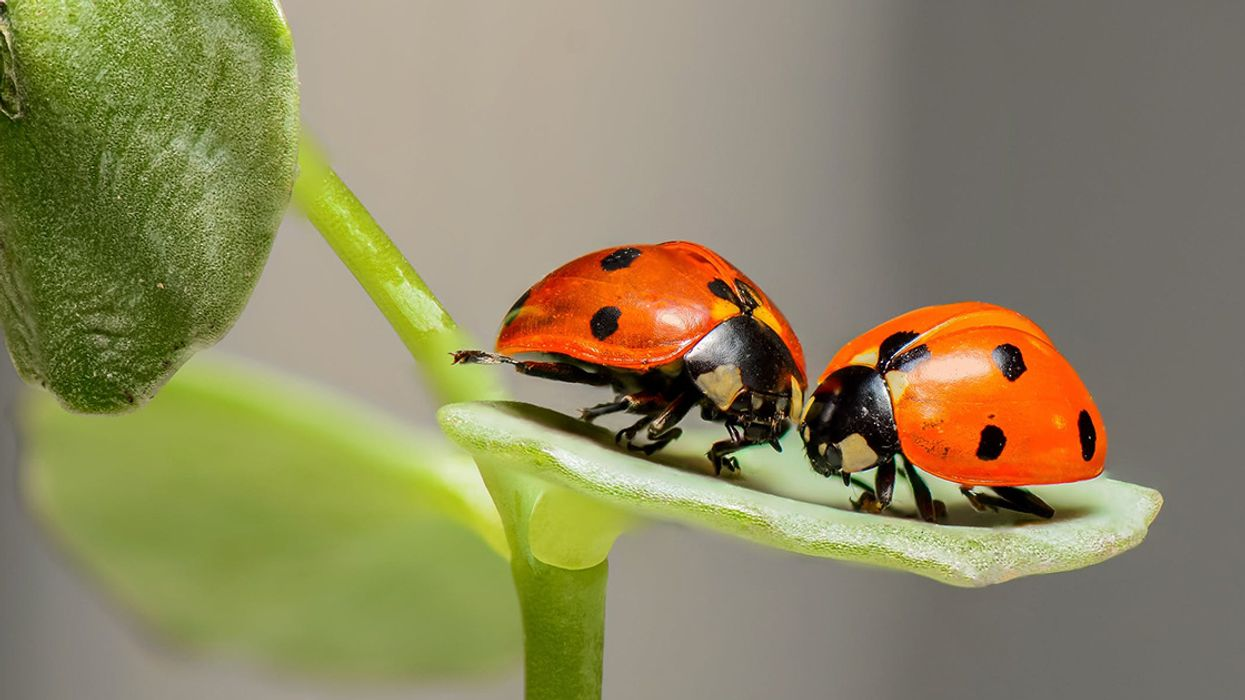 The Insect Apocalypse Is Coming: Here Are 5 Lessons We Must Learn