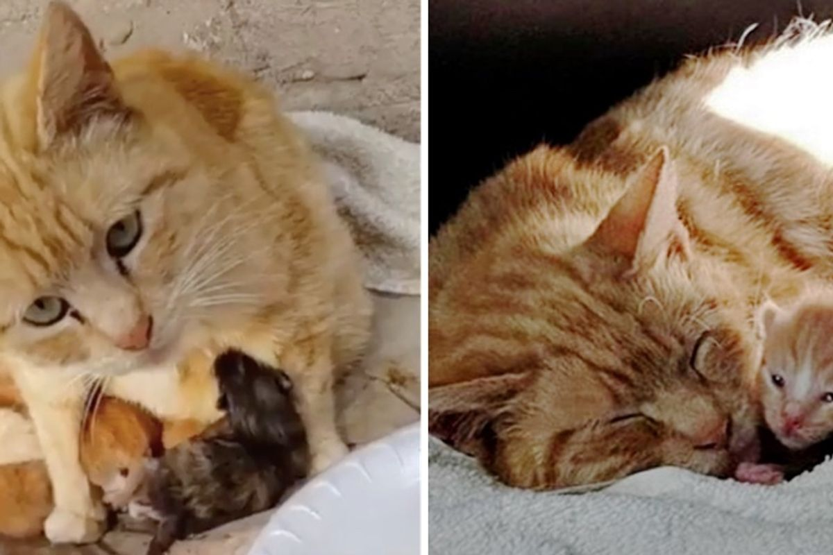 Stray Cat Keeps Her Kittens Warm from the Rain Until Rescue Arrives