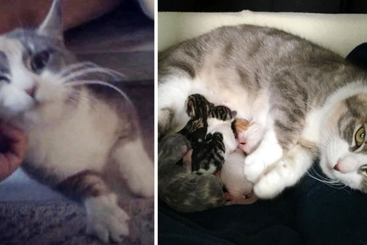 Shy Cat Really Came Around After Someone Rescued Her and Her Kittens from Shelter